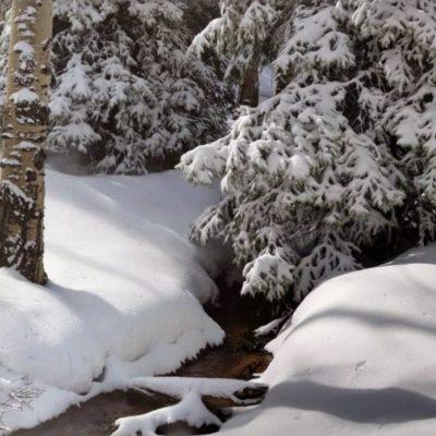 Snowy spring morning
