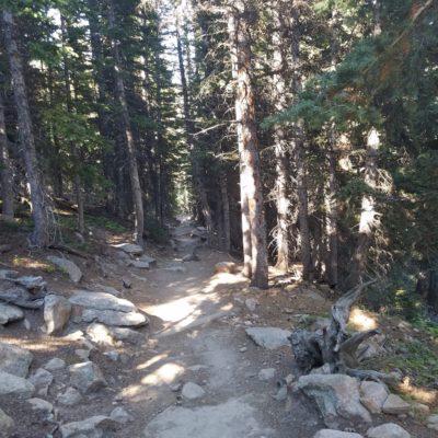 Trail through Goblin Forest