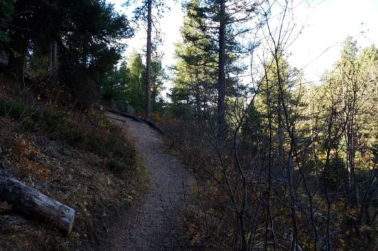 Conifers and pines provide plenty of shade along the trail