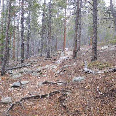 Misty morning on the St Vrain trail