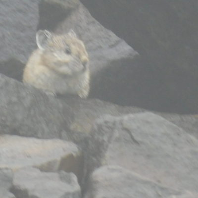 A Pika with me on the summit.