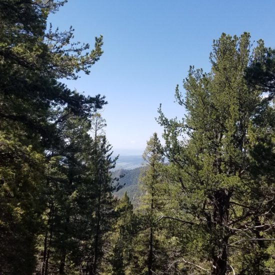 Small breaks in the trees reveal views to the southeast