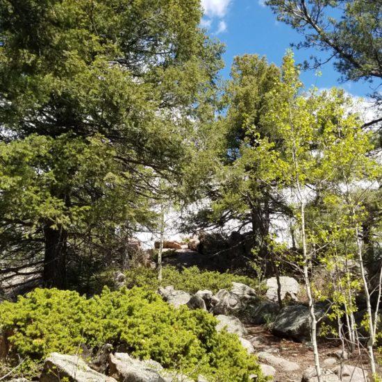 Cheyenne Mountain summit just ahead