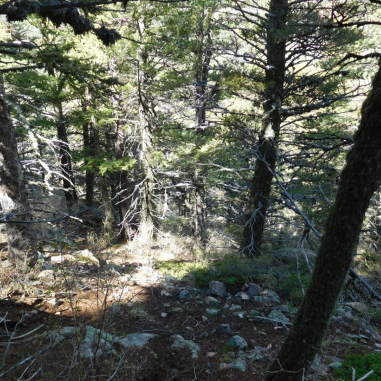 Heading back down the steep side of Cheyenne Mountain