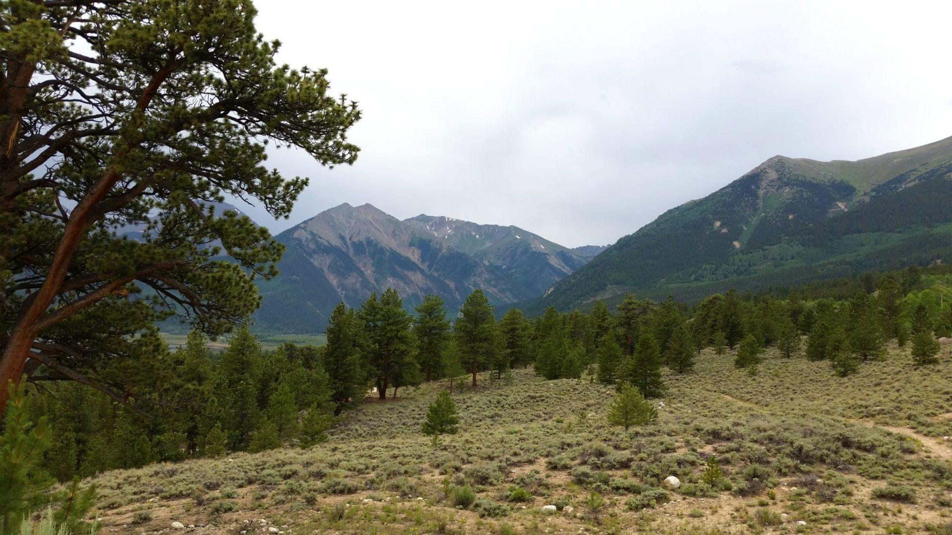 Below treeline along the South Elbert trail