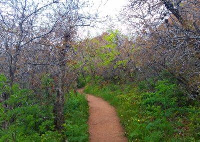 Carpenter Peak trail