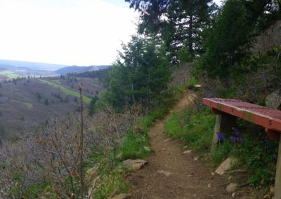 Bench along the trail