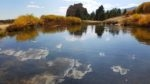 Pond in Mt Herman Park