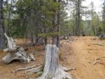 Mt Rosa trail