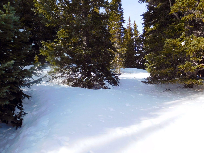 Deep snow below treeline