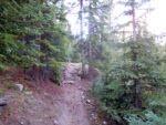 Good trail below treeline