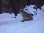 Coyote stayed behind to keep eye on me