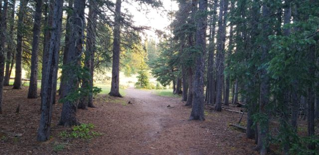 The first mile or more is an impeccably maintained trail (handicap accessible) through pine forest and meadows