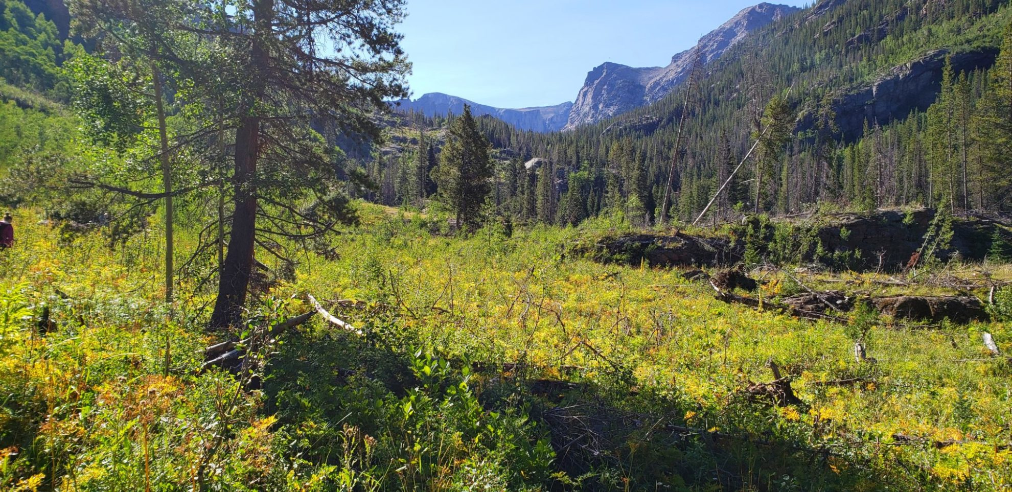 The trail crosses several meadows on the way to Crater Lake