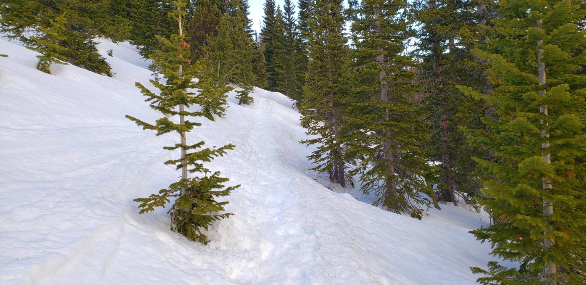 Heading to the Flattop Trail junction above Bear Lake