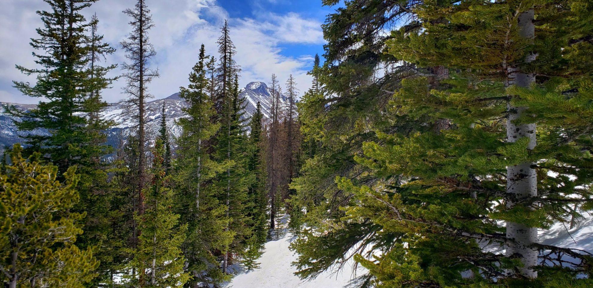 View of Longs Peak along the trail