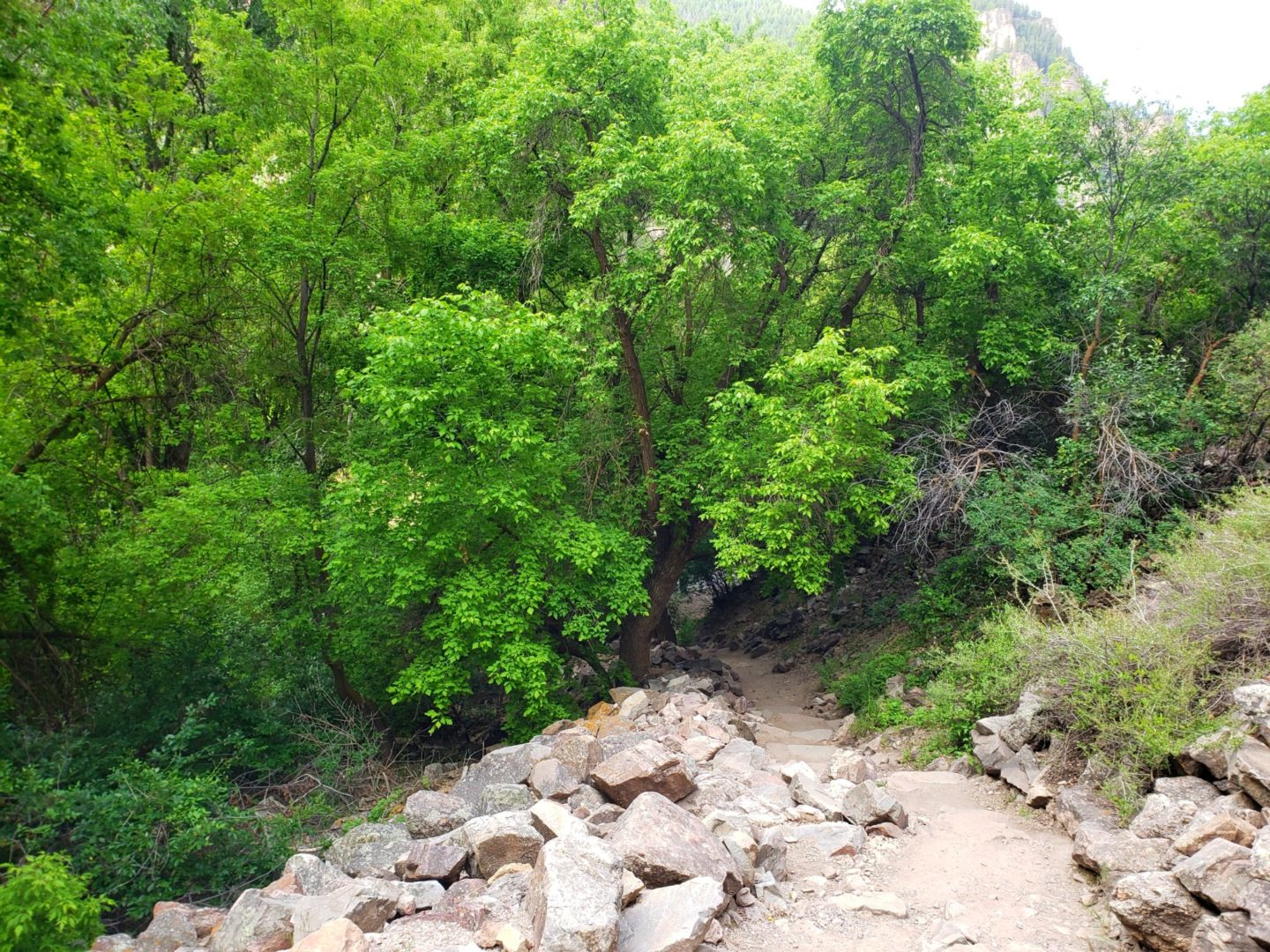 The trail is steep as it climbs up the canyon