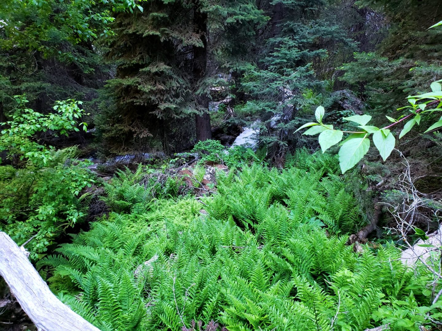 Lush ferns growing in the shade