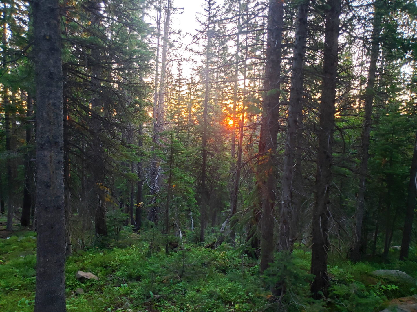 Sunrise through the dense forest