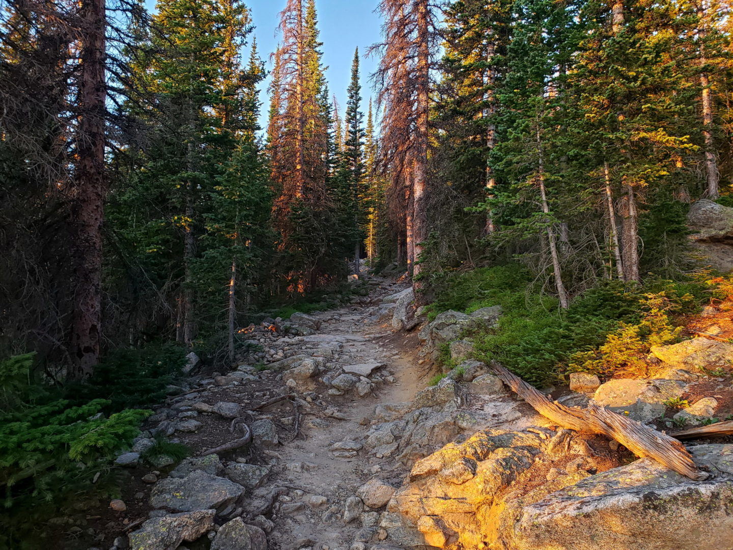 Dense forest along the Flattop Mtn. trail