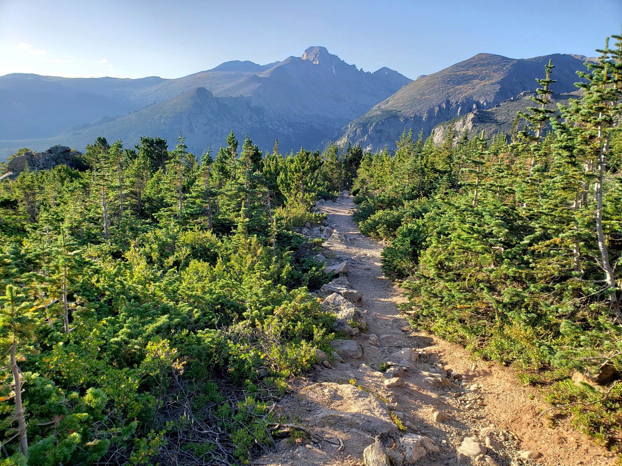 Near treeline along the Flattop Mountain trail