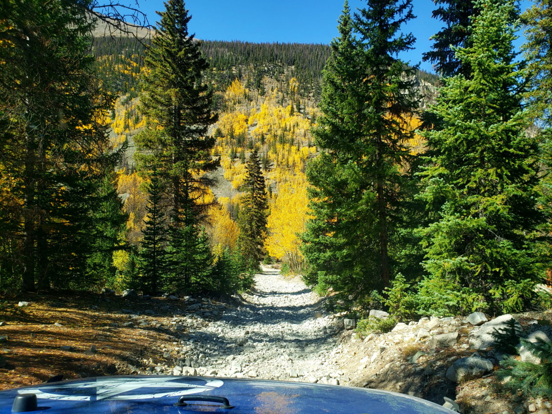 A grove of Aspen trees ahead