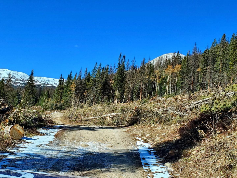 Avalanche debris from last winter