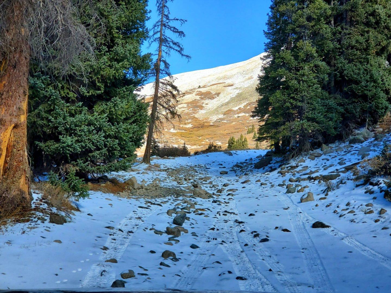 Rough road approaching treeline