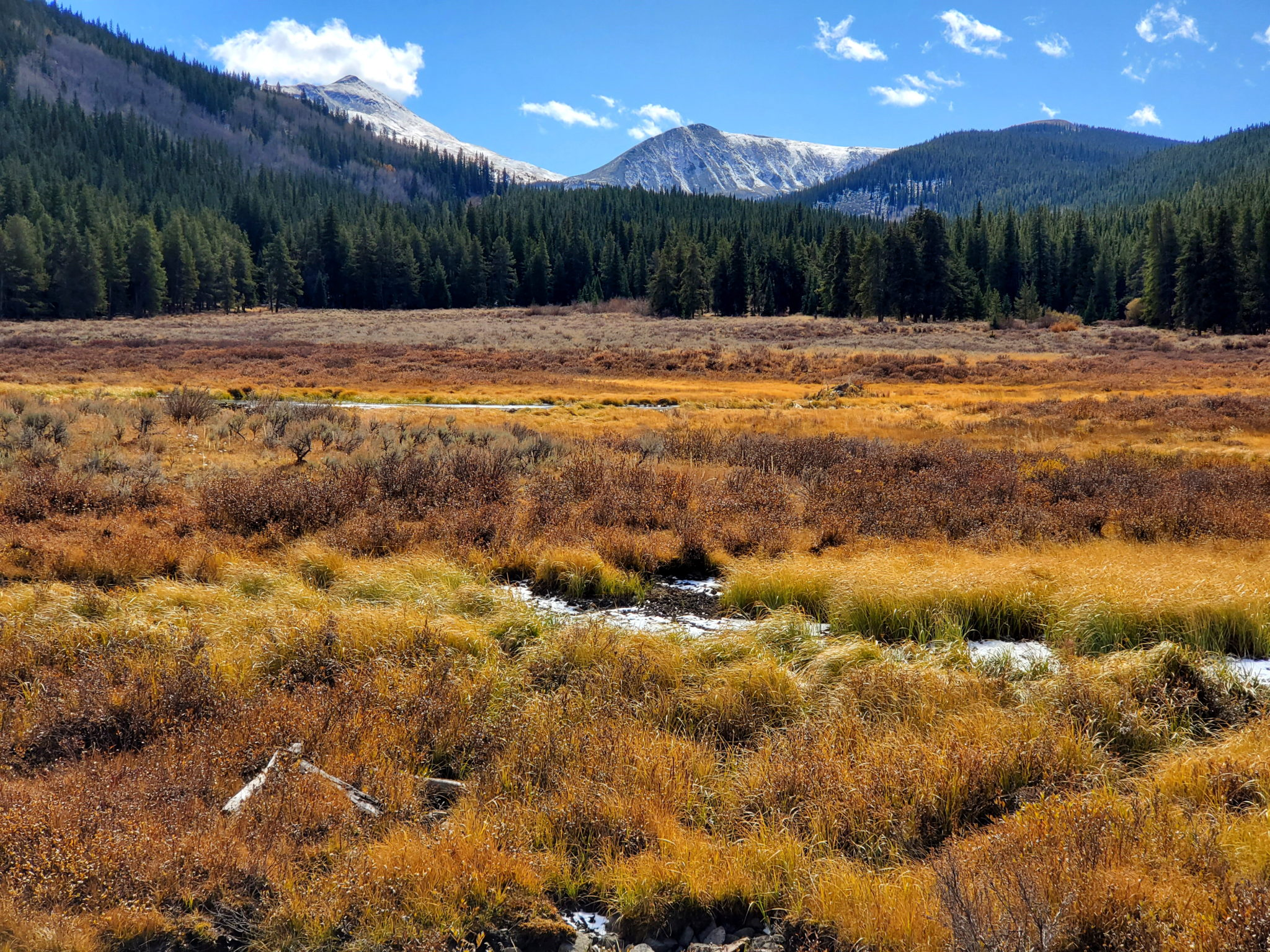 Beautiful fall colors in the grasses