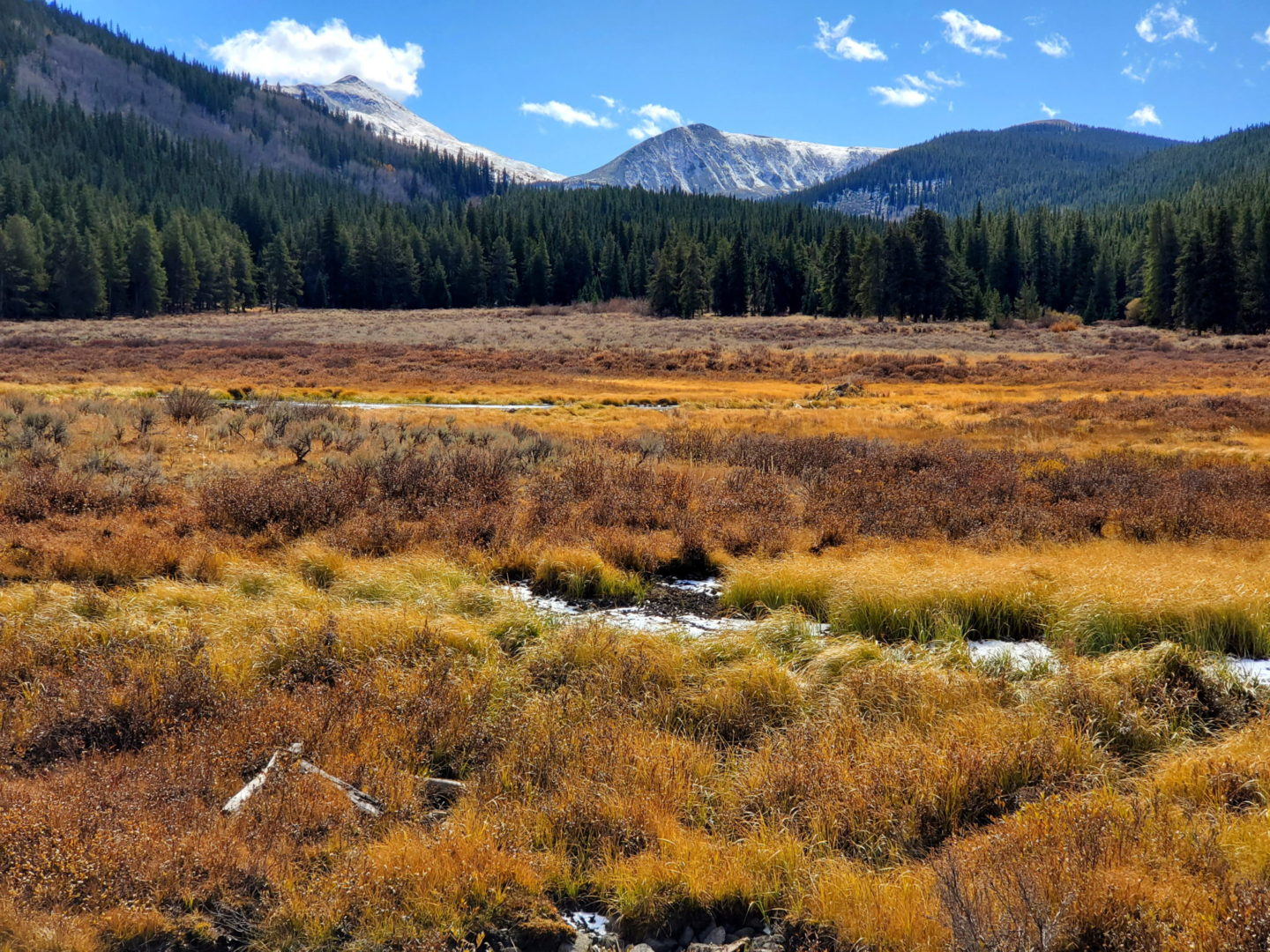 Beautiful fall colors in the meadows