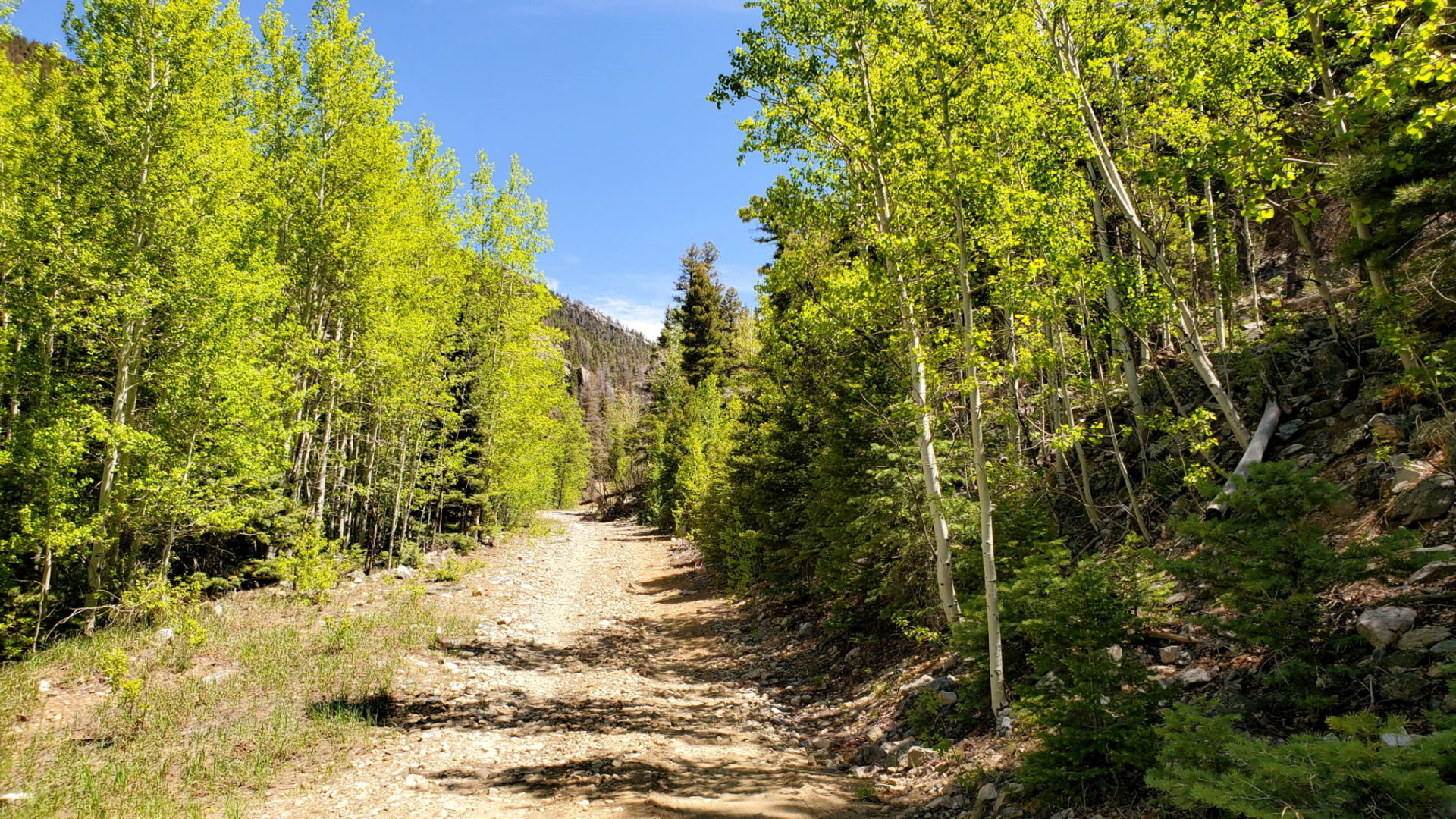 The trail entered thick forests as it climbed to the pass