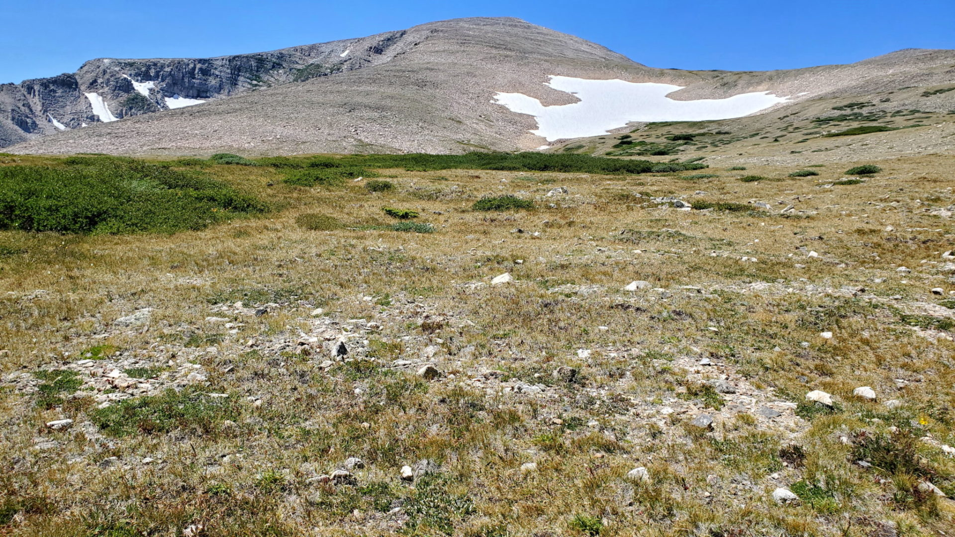 View of Mt Audubon looking west on the tundra