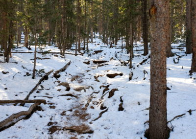 The trail becomes steep again with switchbacks through the forest