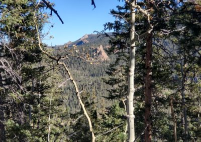 The Crags looking north through the trees