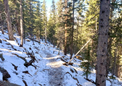 Well used trail through the forest