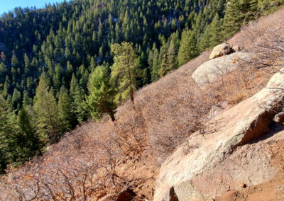 Very few trees on the steep slope