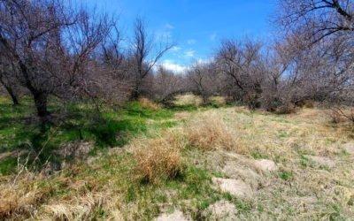 Arikaree River (3,317′), Eastern Plains