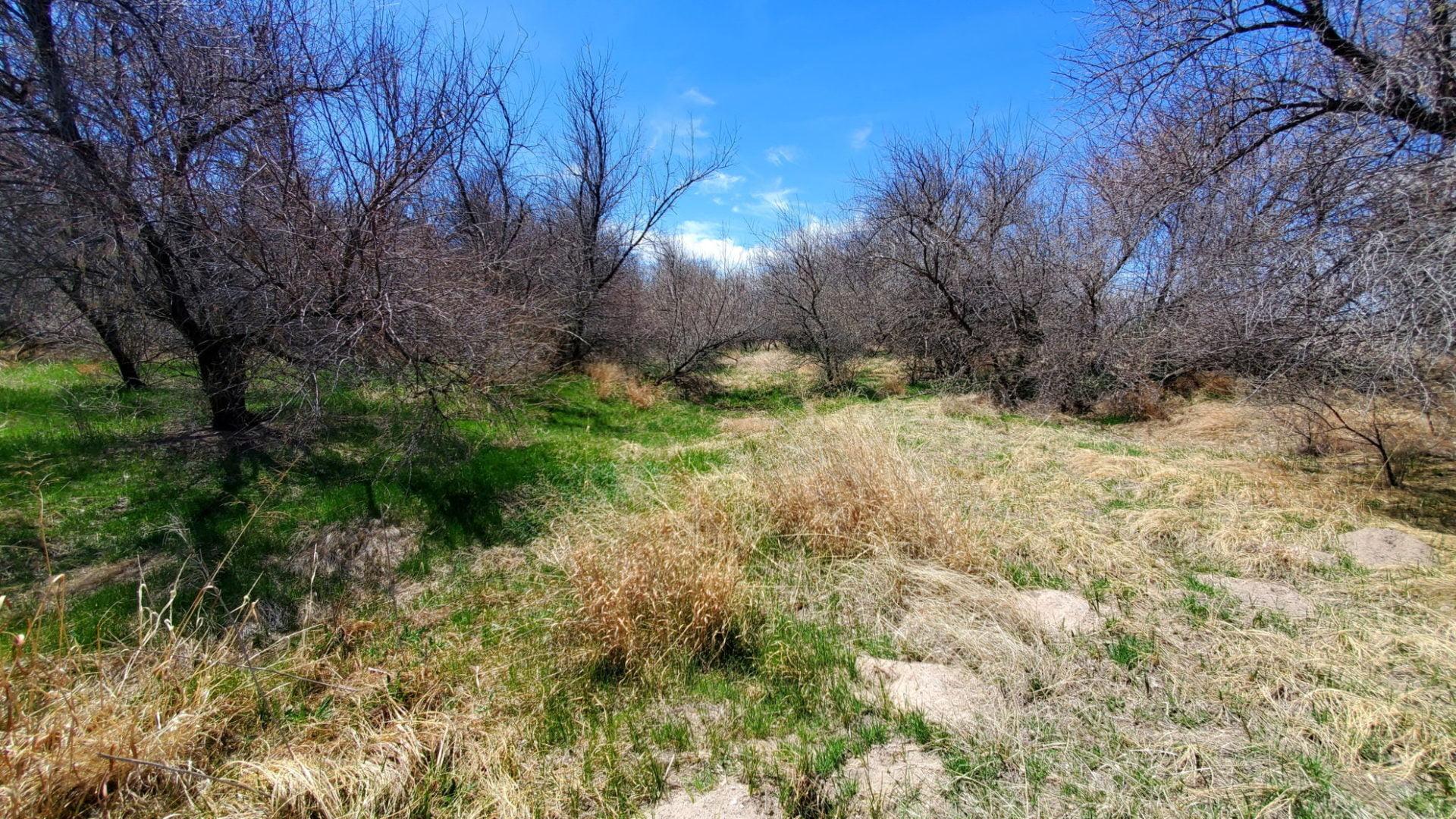 Arikaree River bottom
